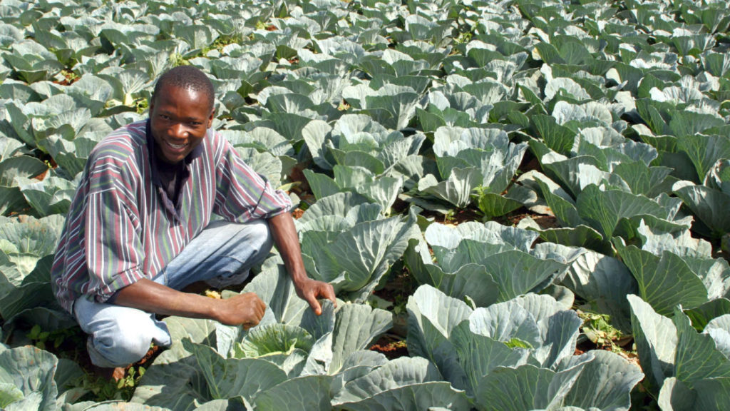Calling African policymakers: our economic future must be powered by our farms