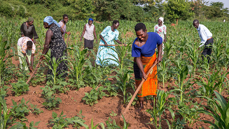Working the land in Uganda